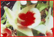 ddawn-maree-x-tormosum1