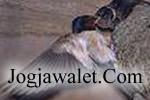 icon-jogja-walet1