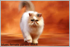 blues-female-parent-stock