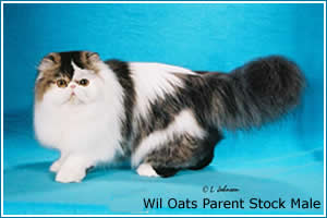 wil-oats-parent-stock-male