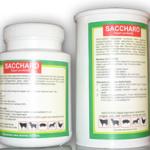 Saccharo – Super Probiotik