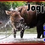 SOUTH EAST  JOGJA TOUR ( 8 Jam ) | JogjaPromo Wisata